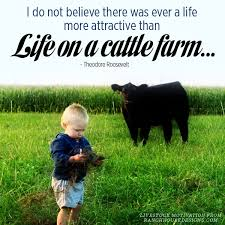 Live Stock Quotes Delectable Ranch House Designs Blog Livestock Motivational Quotes For Pinterest
