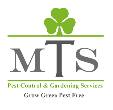 Online furniture & decor shopping store. Home Mts Gardening Pest Control Fumigation Services In Karachi Online Shopping In Pakistan