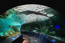 aquarium photography tips