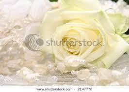 Beautifull Flowers 2011 Wedding Rose Background