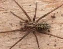 Common Spiders Found In Central Oregon Osu Extension Service
