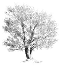 how to draw realistic trees google search