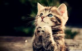 Cat Desktop Wallpapers - Top Free Cat ...