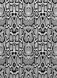 Python Pattern Amazing Snake Python Skin Texture Seamless Pattern Black On White