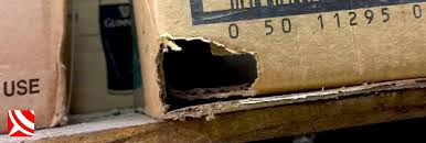 Image result for mice damage