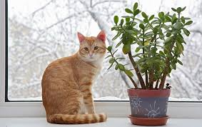 plants that are toxic to cats and dogs