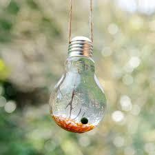 orange lightbulb marimo moss ball terrarium with jute string