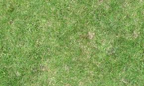 Absolutely Free Seamless Grass Textures Naldz Graphics
