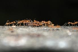 Tiny Black Ants Kitchen 9 Simple Steps To Get Rid Of Ants And Keep Ants Out