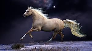 beautiful horses running wallpaper. Wallpaper Horse Mane Running Beautiful Night Sky And Horses