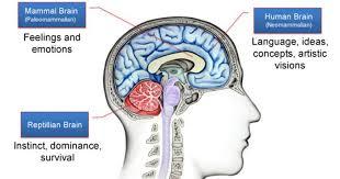 Image result for reptilian brain