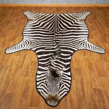 african zebra rug mount for 15265 the taxidermy