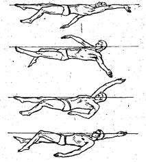 Реферат Плавание кроль на спине брасс на груди кроль на груди  В начальной части ударного движения бедро с нарастающей скоростью продолжает сгибаться в тазобедренном суставе колено при этом поднимается вверх