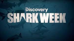 Shark Week 2021 starts Sunday (7-11 ...