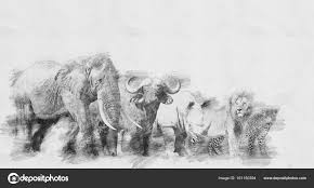 Photo Sketched Animals Big African Five Animal Sketch
