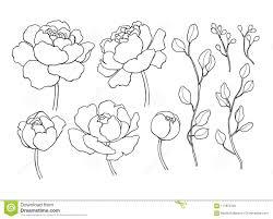 цветок пиона и линия чертеж листьев план вектора нарисованный рукой