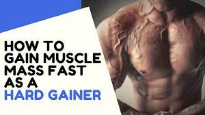 gain muscle m fast as a hardgainer