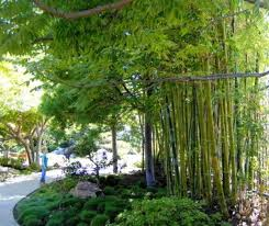 Small Picture 209 best Bamboe tuin images on Pinterest Bamboo garden Gardens