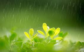 Kết quả hình ảnh cho mưa xuân