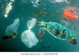 Image result for turtles plastic