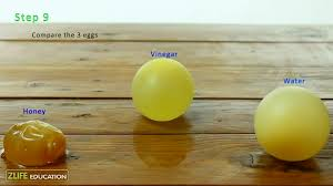 Growing And Shrinking Growing Shrinking Egg Science Experiment For Kids
