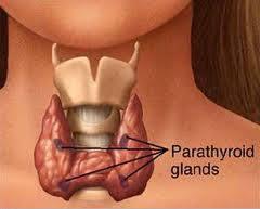 pengobatan penyakit gondok di leher