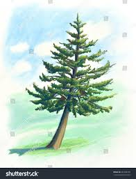 drawn pine tree painted 4