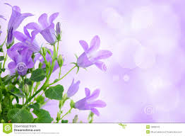 Purple Flowers Backgrounds Purple Flower Background Stock Photo Image Of Foliage