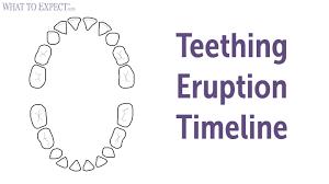 Teething Chart For Babies Child Teeth Chart Ohye Mcpgroup Co
