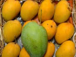 Mangoes Are High On Health Times Of India