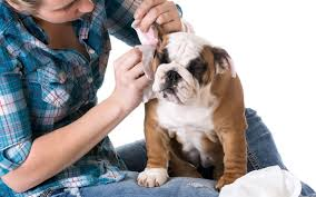 how to make your own dog ear cleaner