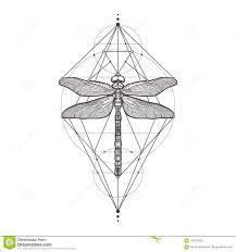 черный Dragonfly Aeschna Viridls изолированное на белой предпосылке