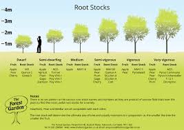 Tree Root Size Chart About Root Stocks The Forest Garden