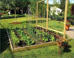Small Picture Triyaecom Backyard Edible Garden Ideas Various design