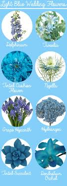 Light Blue Flower Names Shop For Flowers By Color At Fiftyflowers Com Blue
