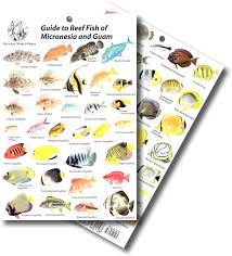 Reef Guide To Guam Fish And Micronesia Card -