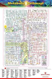 Metabolic Pathways Chart The Wonders Of The Human Cell The Metabolic Pathways Chart