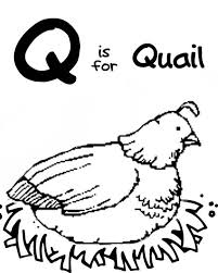 Small Picture Letter Q for Quail Coloring Page for Preschool Kids Bulk Color