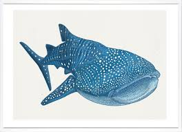 claire scully whale shark outline editions whale shark