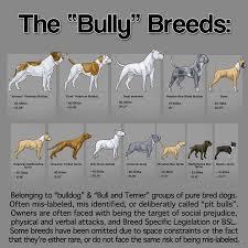 Pitbull Breeds Chart Goldenacresdogs Com