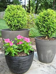 Design Of Potted Plants For Patio Exterior Design Pictures Growing Patio  Plants