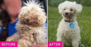rescue dogs before and after they found a fur ever home rescue dog makeovers
