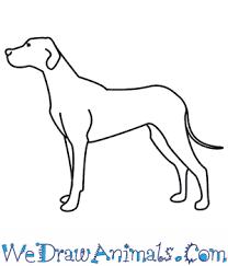 dog drawing. Brilliant Dog To Dog Drawing