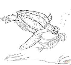 Coloriage Tortue Luth Qui Chasse Une M Duse Coloriages