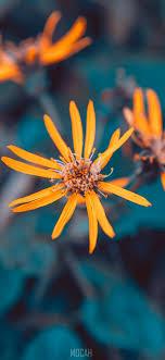 294069 Plants, Flower, Blue, Plant ...