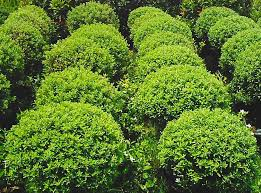 earth garden landscaping philippines landscaping services supplier of plants trees other garden or landscaping needs vertical garden