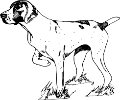 Small Picture Skillful Pointer Animal Coloring Pages Danish Pointer Coloring