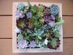 succulent wall art luxury with additional home decorating ideas with succulent wall art