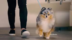 petsmart animals dogs.  Animals PetSmart Grooming TV Commercial U0027Runwayu0027 Song By Meghan Trainor  ISpottv For Petsmart Animals Dogs F