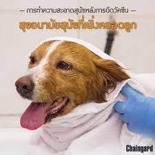 การทำความสะอาดสุนัขหลังการฉีดวัคซีน สำหรับสุขอนามัยสุนัขที่เพิ่งคลอดลูก -  Chaingard Thailand